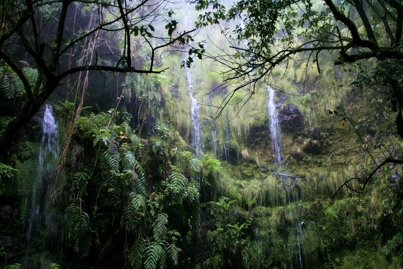 Caldeirao Verde - by Virgilio Silva - Nature Meetings