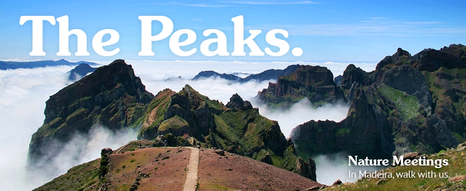 Madeira Walks: The Peaks (Pico do Arieiro to Pico Ruivo)